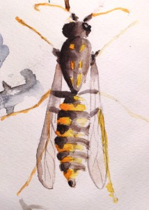 (vespula germanica)